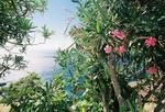 Blumen und Meer Idylle Pur